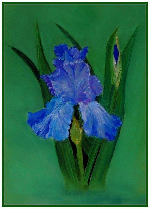 Голубой ирис (сухая пастель)